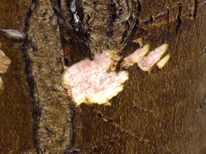beaver-teeth-marks-upper-lower