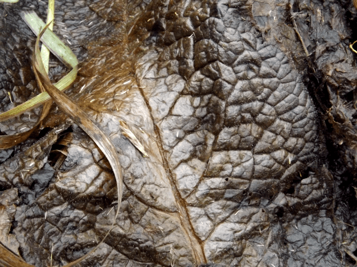 frost-damaged-decomposing-weed