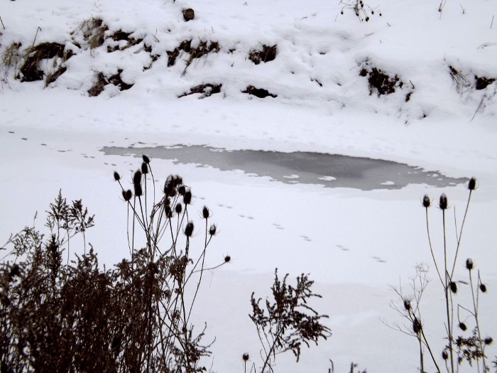 animal-paw-prints-on-thin-ice-river-winter