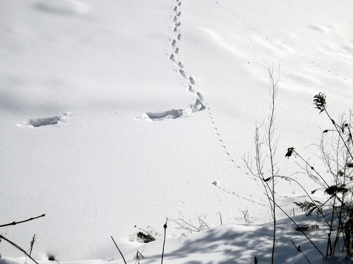 three-tracks-rabbit-mouse-river-snow