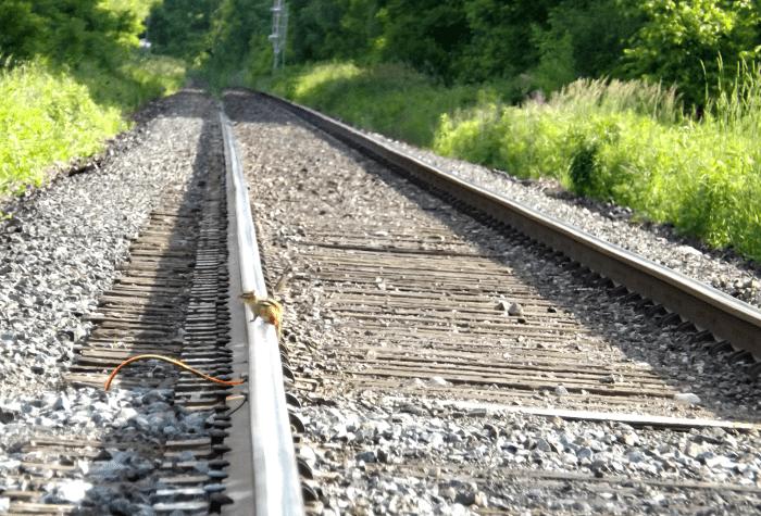 chipmunk-crossing-the-railroad-tracks-summer-perspective-train-tracks