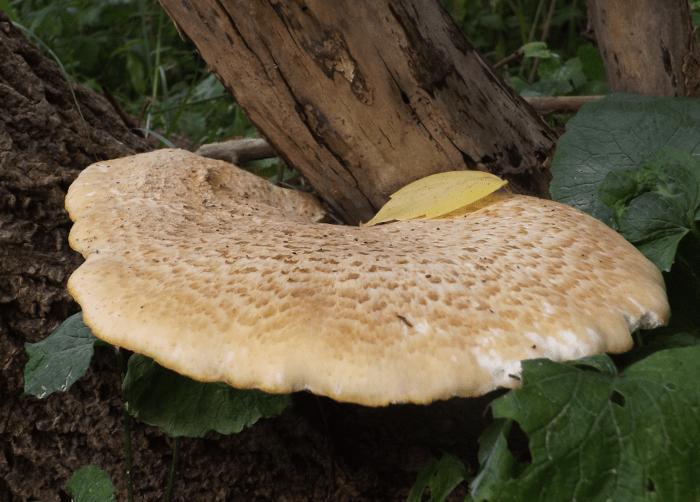 fungus-tree-summer-fan