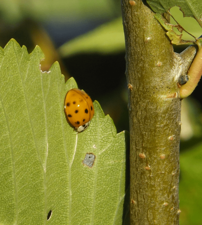 ladybug-in-autumn-afternoon-sun