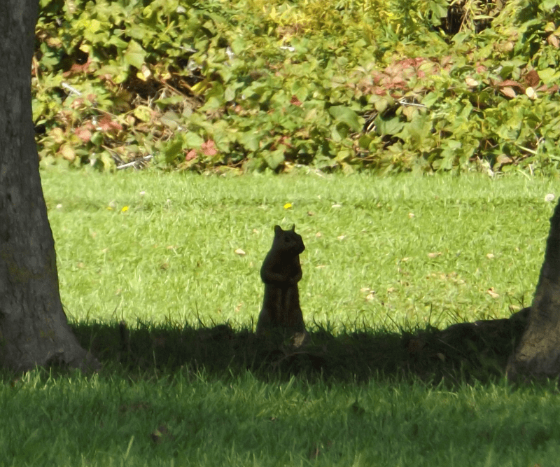 watchful-squirrel-midday-sun