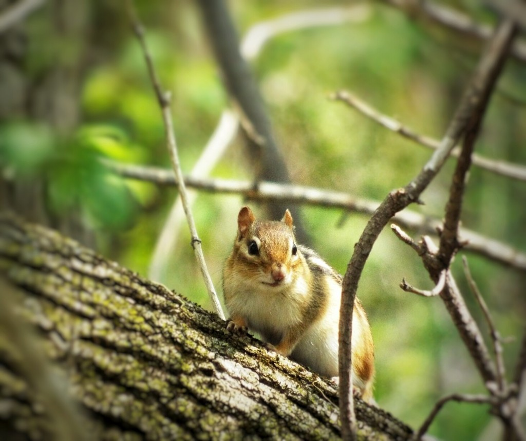 striped-chipmunk-holland-river-tree-trunk