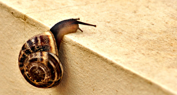 Snail on step by Lisa Solonynko at Morguefile.com