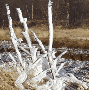 This plant was coated in frosty wafers that had grown out as moisture blew from the hot springs and froze in layers.