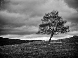 A Lone Tree by hotblack on Morguefile