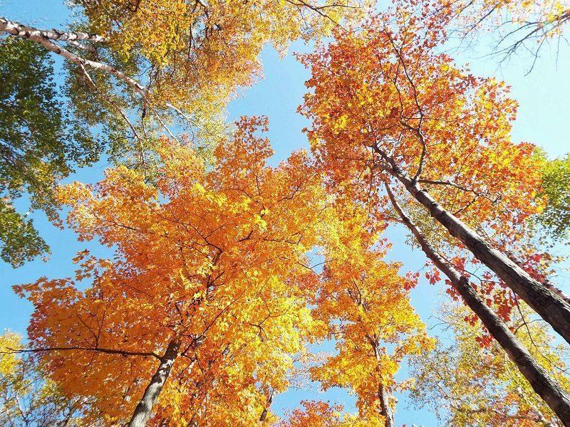 killbear-provincial-park-fall-colors-2015